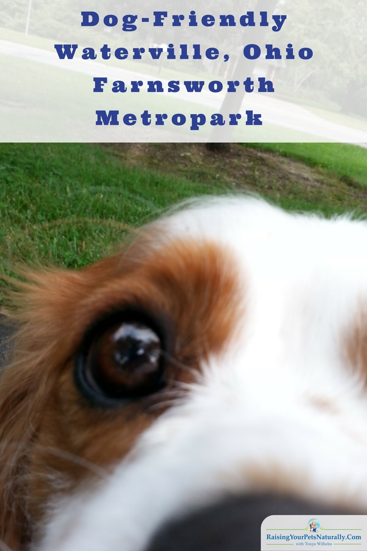 Dog-Friendly Toledo, Ohio Parks Dog-Friendly Waterville, Ohio: Farnsworth Metropark
