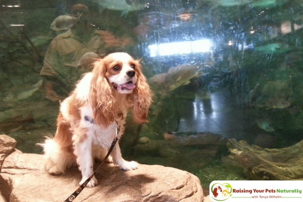 Dog-Friendly Ohio Stores and Activities, Rossford, Ohio #raisingyourpetsnaturally