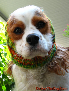 Custom dog snoods and reviews