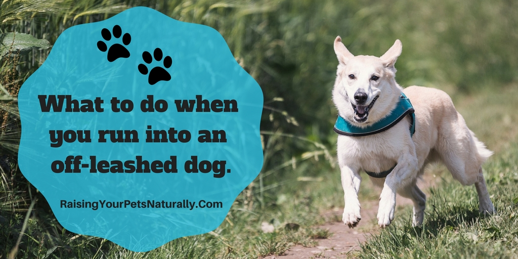 What to do when you run into an aggressive off leashed dog.