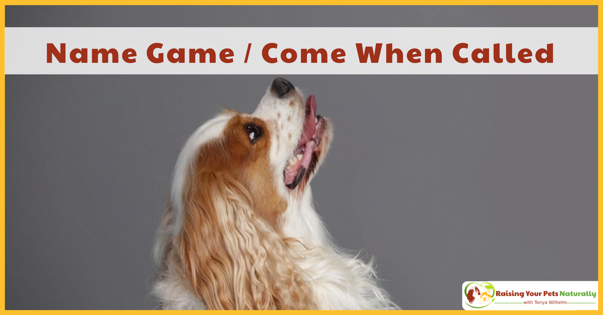 Learn how to teach your dog the value of his name. Come when called, not barking at the windows, they all start with a reliable Name Game. #raisingyourpetsnaturally