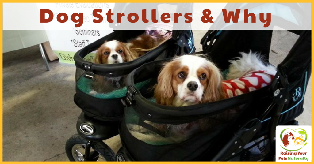 Dog Stroller, Pet Strollers and Why. Shouldn't a dog be walking and getting exercise? I thought that too, but there are numerous reasons for a dog stroller. Read before you laugh. #raisingyourpetsnaturally