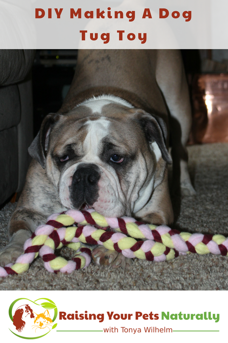DIY for Dogs. How to make a dog tug of war toy out of fleece. Learn how easy it is to make a fun toy for dogs. #raisingyourpetsnaturally #diy #diydog #dogtoys