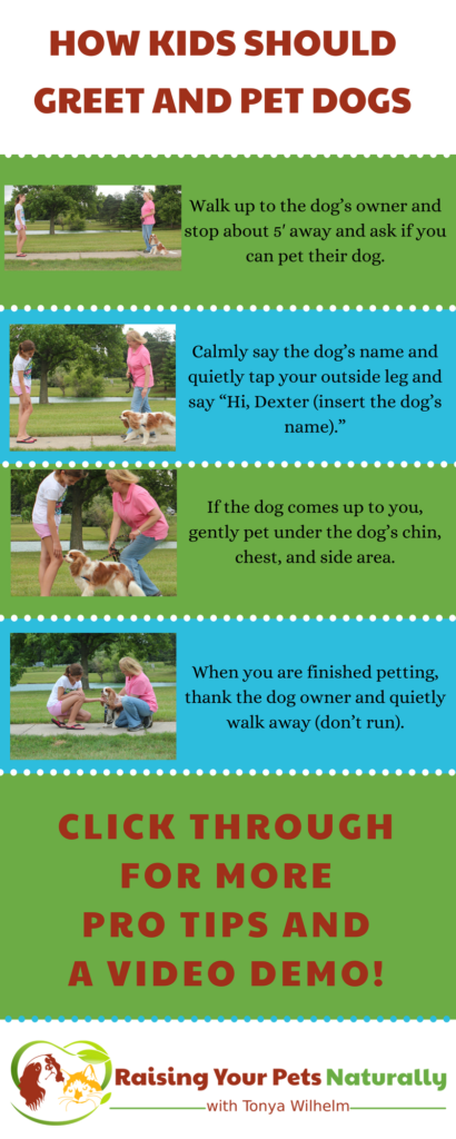 Kids and dogs can be amazing friends. Learn how to teach your child to greet, pet and say hello to dogs. #raisingyourpetsnaturally #kidsanddogs #childrenanddogs #dogsandkids