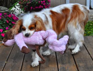 Best dog toy reviews.