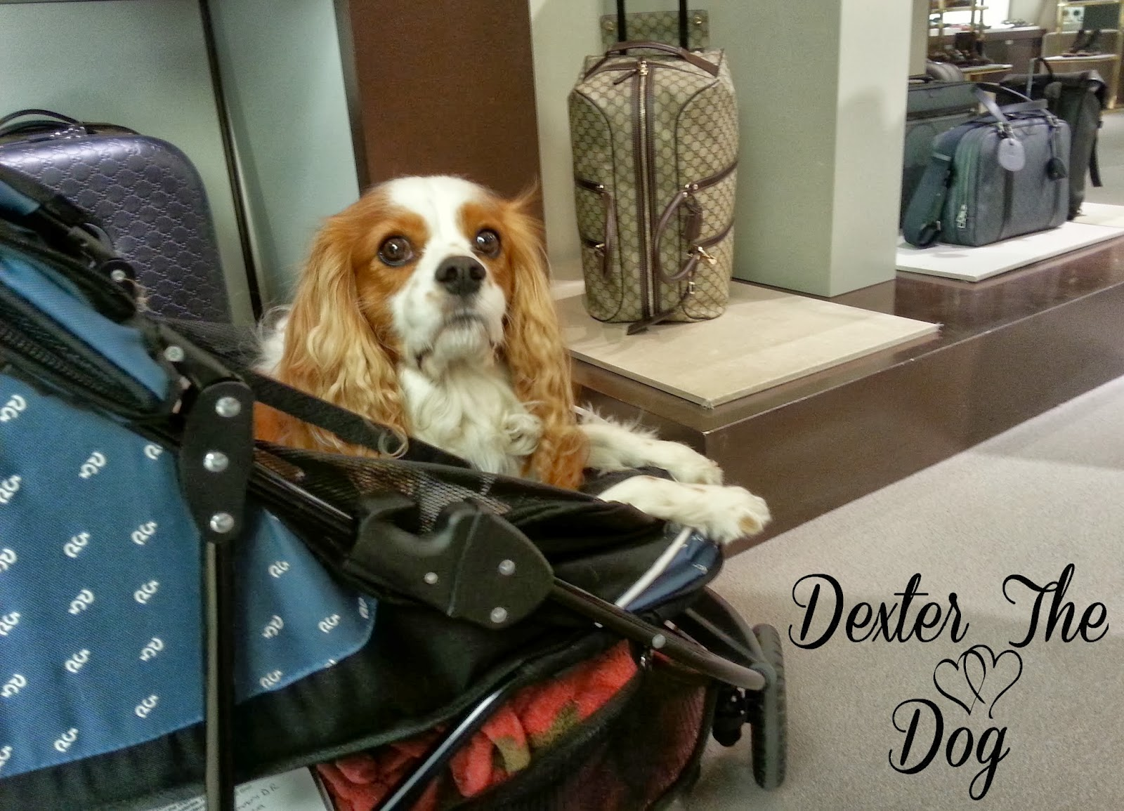 Pet Gear Special Edition Dog Stroller Review