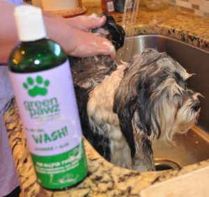 Natural dog shampoo reviews