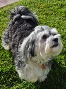 Natural Dog Shampoo Review