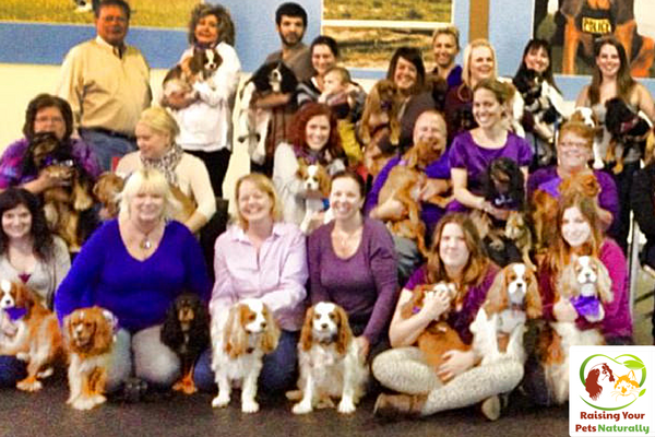 Chicago Cavalier King Charles Clubs and Meet Ups. Cavalier play dates. Cavalier King Charles Spaniel dog training and tips. Click to join the fun. #raisingyourpetsnaturally