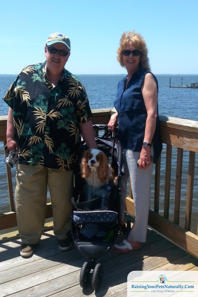 "That was just one of our dog-friendly trips to Duck, NC! Another day we headed to The Waterfront Shops. They too were pretty dog-friendly and accommodating. We just continued to ask if Dexter could come in and they pretty much always said, ""Yes."" The shops were situated so that the walking was on a boardwalk facing the shores of The Currituck Sound and meets up to the Duck Town Boardwalk."