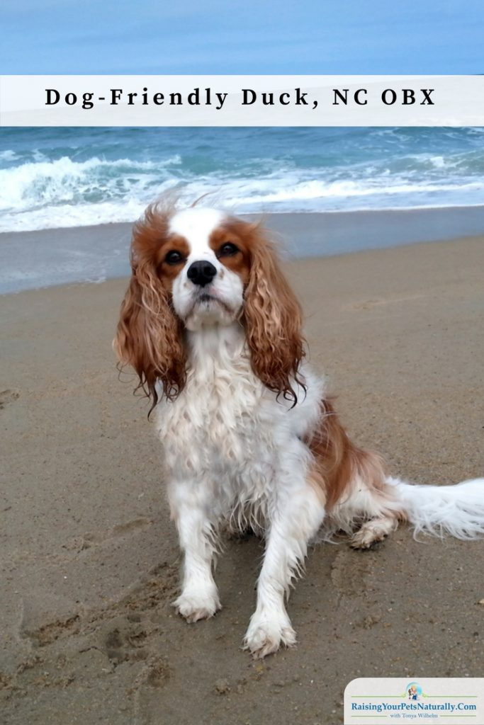 Dog-Friendly Vacations: Dog-Friendly Outer Banks: Duck, North Carolina. Donald's Duck is a dog-friendly vacation home situated right in Duck, NC. A perfect location for our dog-friendly Outer Banks vacation. We had just a short stroll to the beach and were only a mile from the shopping centers.