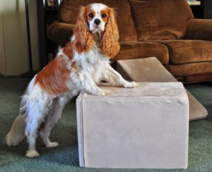 Strong Dog Ramps