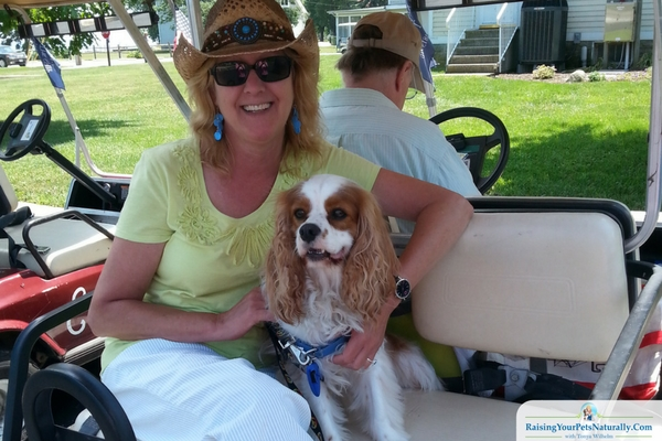 Pet-Friendly Golf Carts in Put-I-Bay
