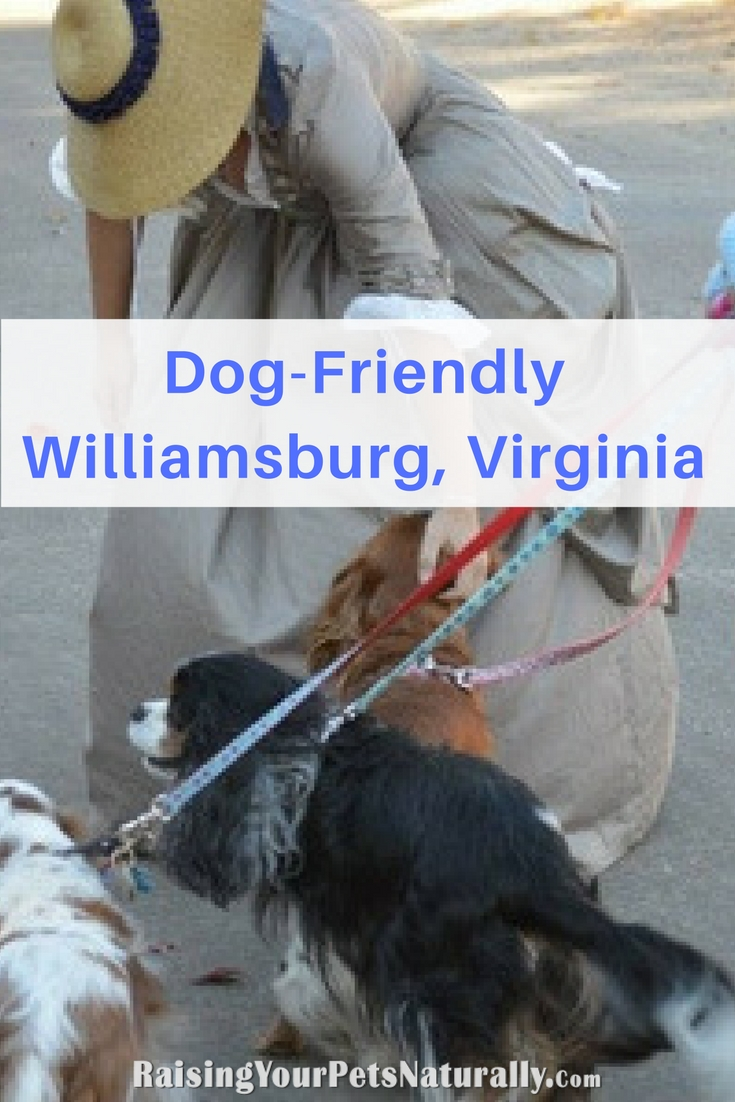 Dog-Friendly Vacations: Dog-Friendly Williamsburg, Virginia. Check out these fun dog-friendly activities in Williamsburg VA