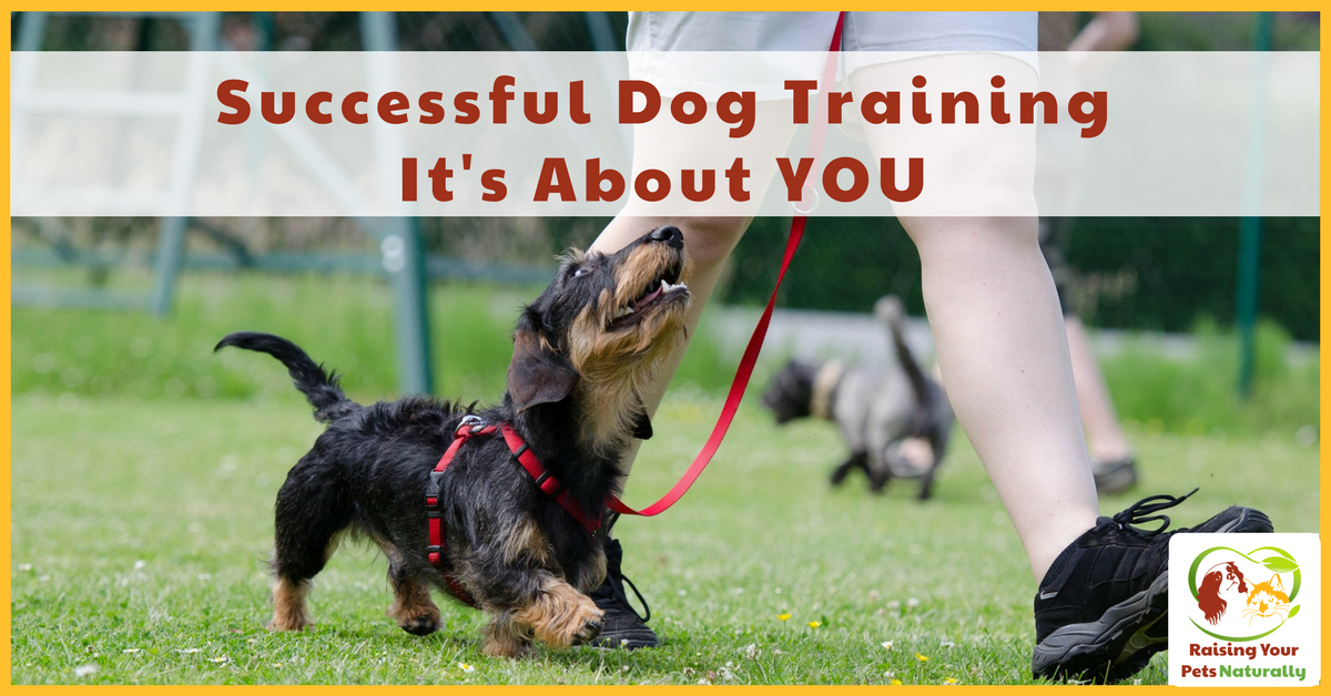 Successful Dog Training is About YOU. Dog Training and Dog Trainers are Not The End Result It's about what you, the owner do outside of your dog training lessons that will determine your dog's success. #raisingyourpetsnaturally