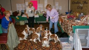 Tonya Wilhelm provides a variety of #dogtraining, #petnutrition, #catbehavior and #dogentertainment workshops and seminars globally. You can book one of the top ten dog trainers for your conference today. #raisingyourpetsnaturally #conferencespeakers #dogbehaviorspecialist #catspecialist #petnutrionspecialist