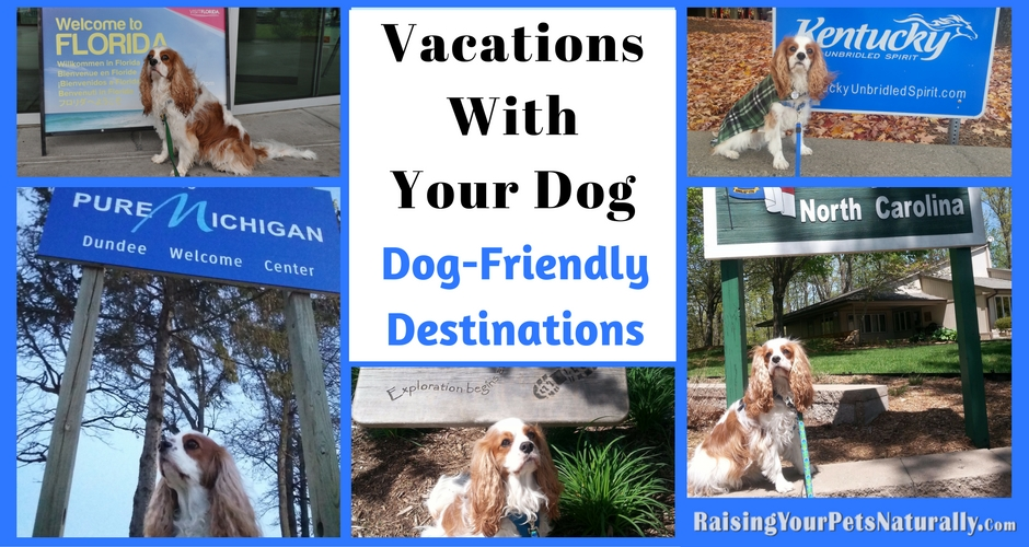 If you are looking for a dog-friendly vacation or dog-friendly day trip, check out some of these great dog-friendly vacations! #raisingyourpetsnaturally
