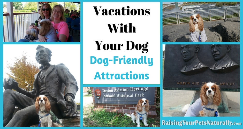 Are you a fellow traveler that likes to travel with your dog? It sometimes is hard to find a dog-friendly attraction when you are on vacation with your dog. Here are some pet-friendly attractions you can take your favorite, well behaved dog too.
