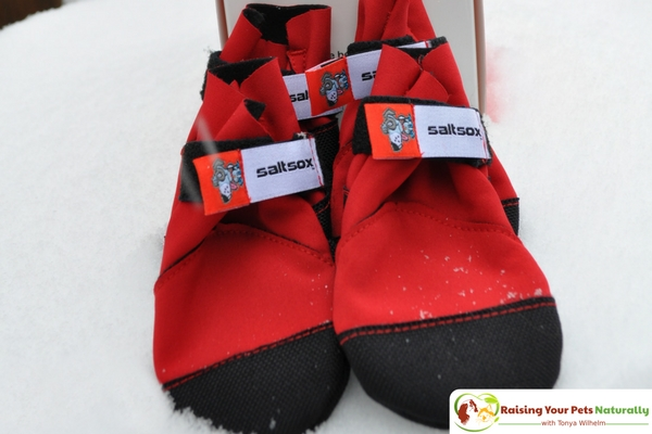 Dog Shoes and Dog Boots for Snow. Saltsox Urban Booties Dog Boots that Stay On! #raisingyourpetsnaturally