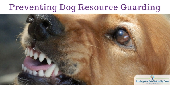 Stop a dog from growling and biting