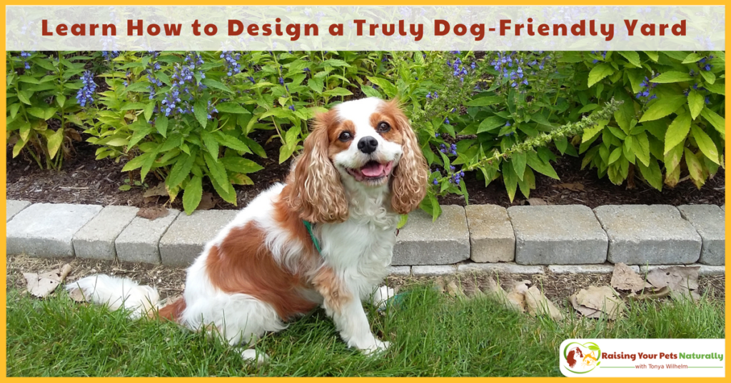 Non-Poisonous Plants and Flowers for Dogs. The following tips and ideas can be easily implemented in your yard so your shared time outside will be a truly divine experience for your dog and your family. #raisingyourpetsnaturally