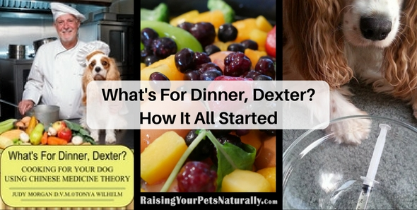What's For Dinner, Dexter? Learn about Dexter The Dog's backstory. Learning how to home cook a healthy and balanced meal for your dog. #raisingyourpetsnaturally
