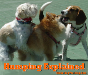 Why do dogs hump