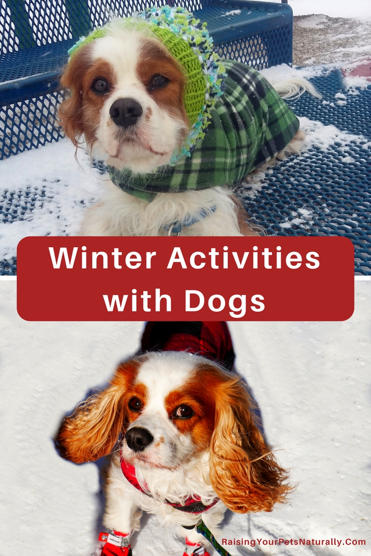 Dog activities archives raising your pets naturally with tonya wilhelm - Keeping outdoor dog happy winter ...