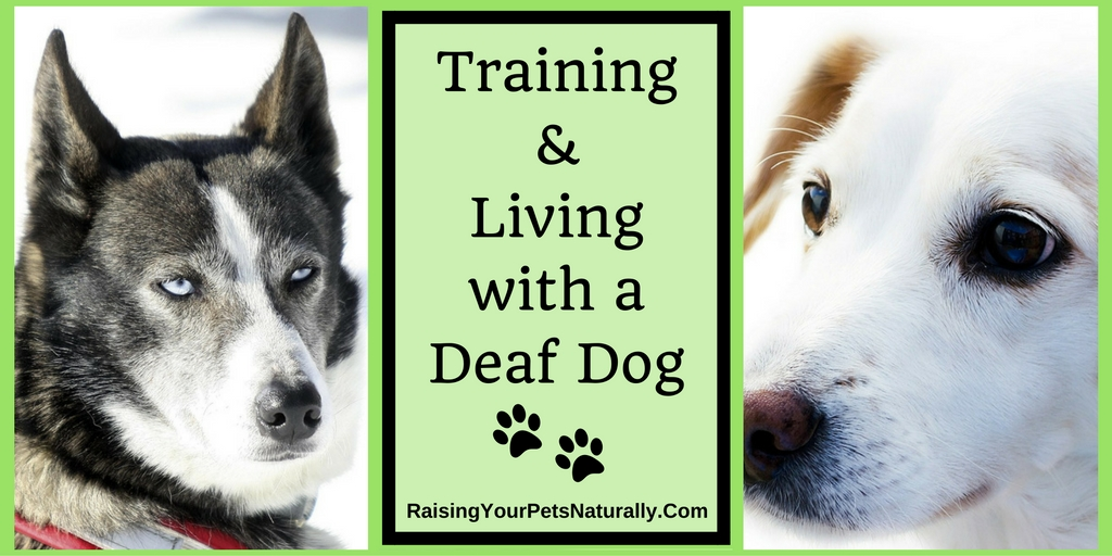 Deaf Dogs And How To Train A Deaf Dog Training A Deaf Dog