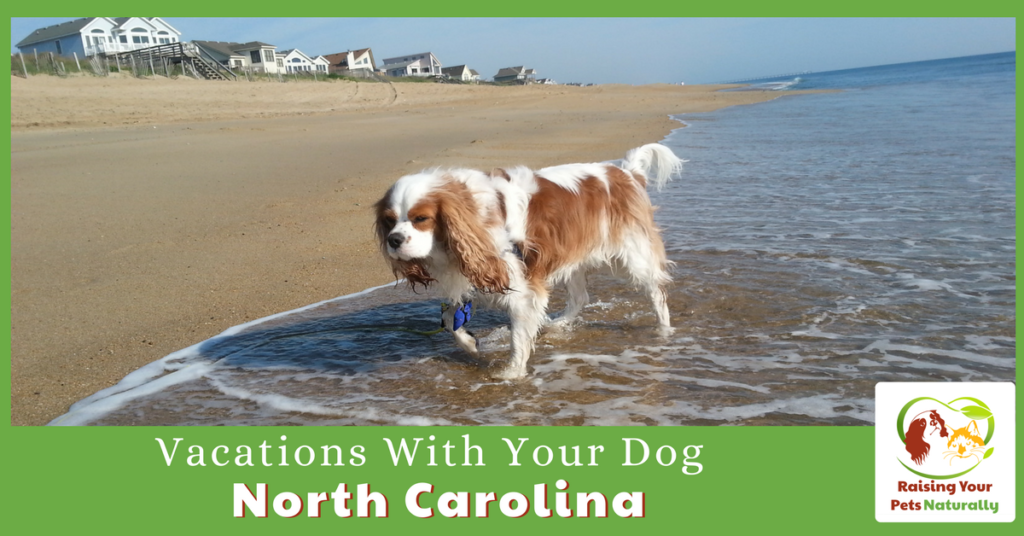Dog-friendly vacations in North Carolina. Traveling with dogs has never been easier. Click to visit our dog-friendly vacations in North Carolina. #raisingyourpetsnaturally