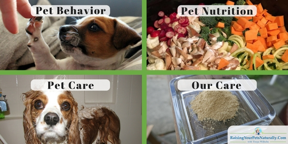 Are you looking for a little more help on raising your pets naturally? Please feel free to browse through my selection of positive dog training and behavior articles and videos. Dogs and cats? You got it. Canine and feline nutritional advice? I have that for you, too. I hope you find these free pet articles and videos helpful. If you are looking for a more personalized approach, please feel free to contact me for a private evaluation.
