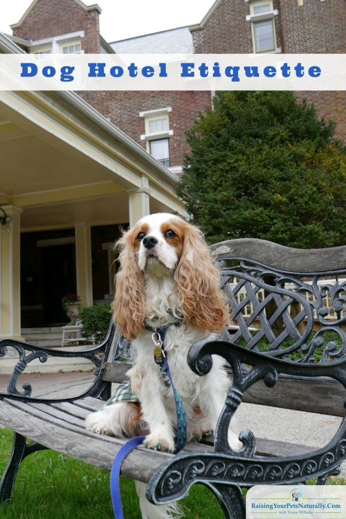 Traveling with dogs can be a blast. Finding a pet-friendly hotel is usually at the top of the list. Here are my top tips for dog hotel etiquette. #raisingyourpetsnaturally #dogfriendlyhotels #petfriendlyhotels #travelingwithdogs #vacationswithdogs