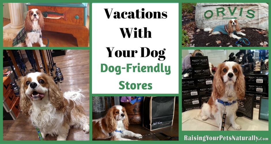 Dog-friendly stores and shopping centers. Vacations with your dogs can be so much fun when you find dog-friendly stores and shops! #raisingyourpetsnaturally