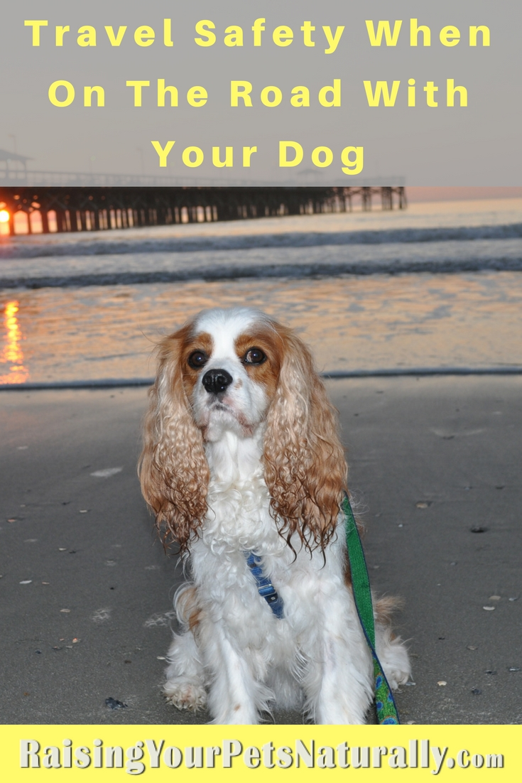 5 tips to make your dog-friendly vacation a fun and safe trip. Dog-friendly vacations and traveling with dogs can be great if you follow a few travel safety tips. #raisingyourpetsnaturally
