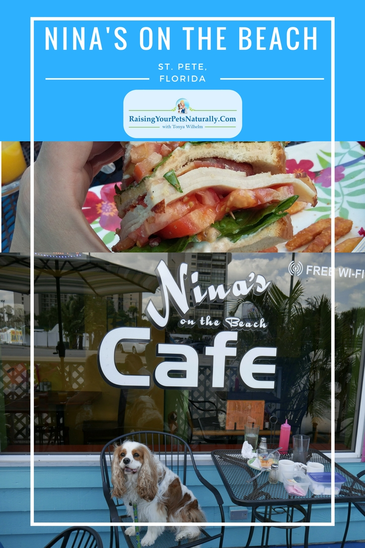 Dog-friendly vacations in Florida. Dog-friendly restaurants in St. Pete Beach, Florida. Nina's on the Beach Cafe in St. Pete is a wonderful dog-friendly cafe. #raisingyourpetsnaturally #dogfriendly #dogfriendlycafes #dogfriendlyflorida #dogfriendlyvacations