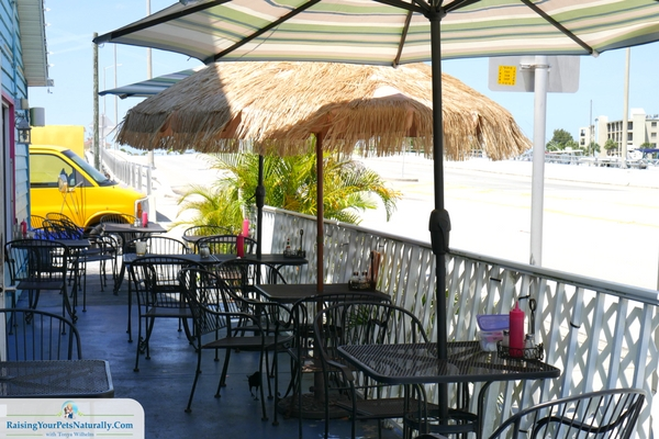 Dog-Friendly Restaurants in Florida: Nina's on the Beach Cafe Review-St. Pete Beach, Florida