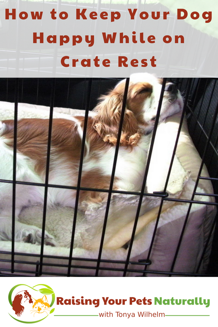 Learn how to keep your dog busy and entertained while he's on crate rest. Here are a few ideas to help you and your dog while on crate rest. #raisingyourpetsnaturally #dogcrate #crategames #craterest