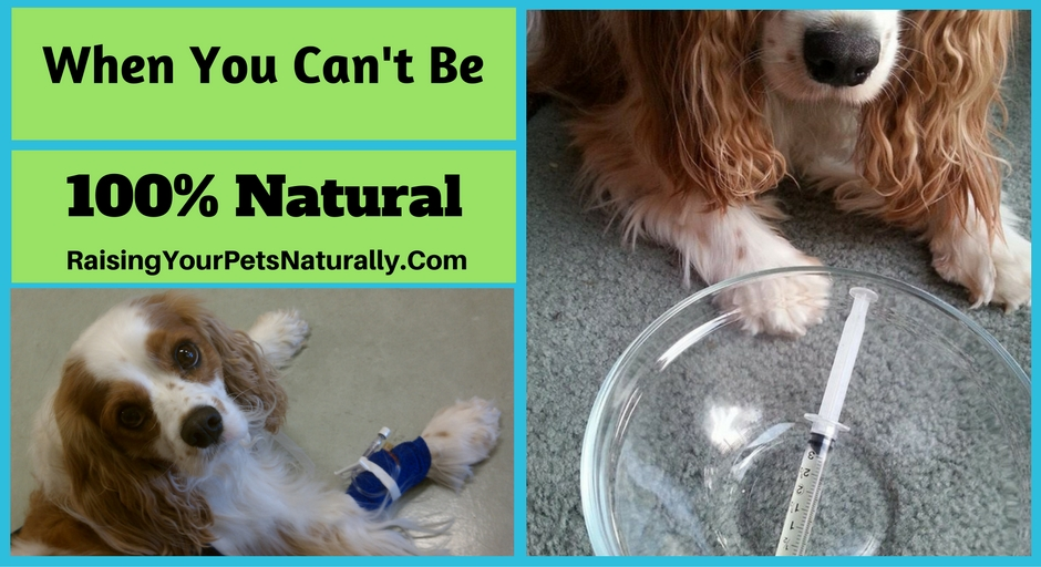 As a pet professional focusing on raising my pets naturally, my goal is to use as many natural and holistic treatments as possible with my own pets. Using pharmaceuticals on my pets is something I do my best to avoid. I always turn to natural therapies first, but unfortunately, that is not always possible.