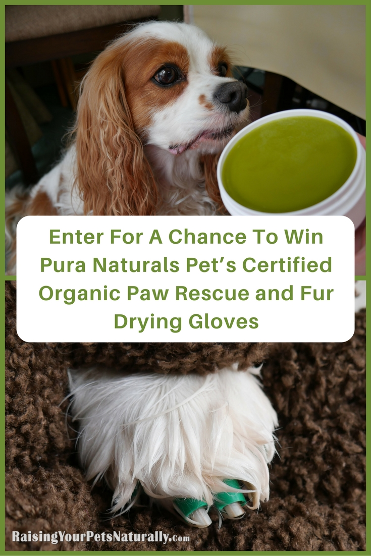 Find the best pet contests and giveaways