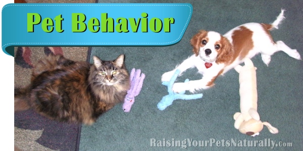Natural and Positive Pet Behavior