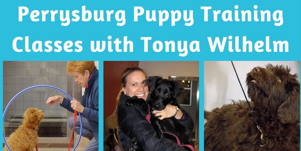 Toledo Dog Training, Perrysburg Puppy Classes, Maumee Dog Trainers and Dog Training Classes Perrysburg Puppy Training and Dog Training Classes