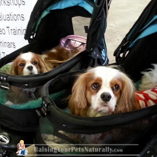 High quality dog strollers