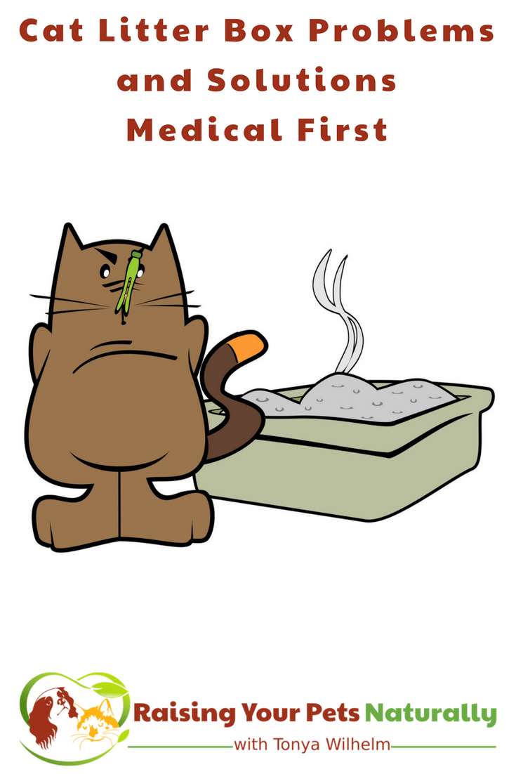 Cat Peeing and Pooping Outside The Litter Box. If your cat is not using the litter box, there may be a sneaky medical reason. Learn more today. #raisingyourpetsnaturally #catnotusinglitterbox #catlitter #catbehavior