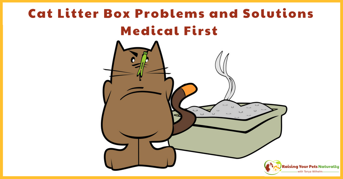 Cat Peeing and Pooping Outside The Litter Box. If your cat is not using the litter box, there may be a sneaky medical reason. Learn more today. #raisingyourpetsnaturally