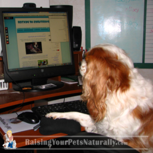Contact A Pet Professional