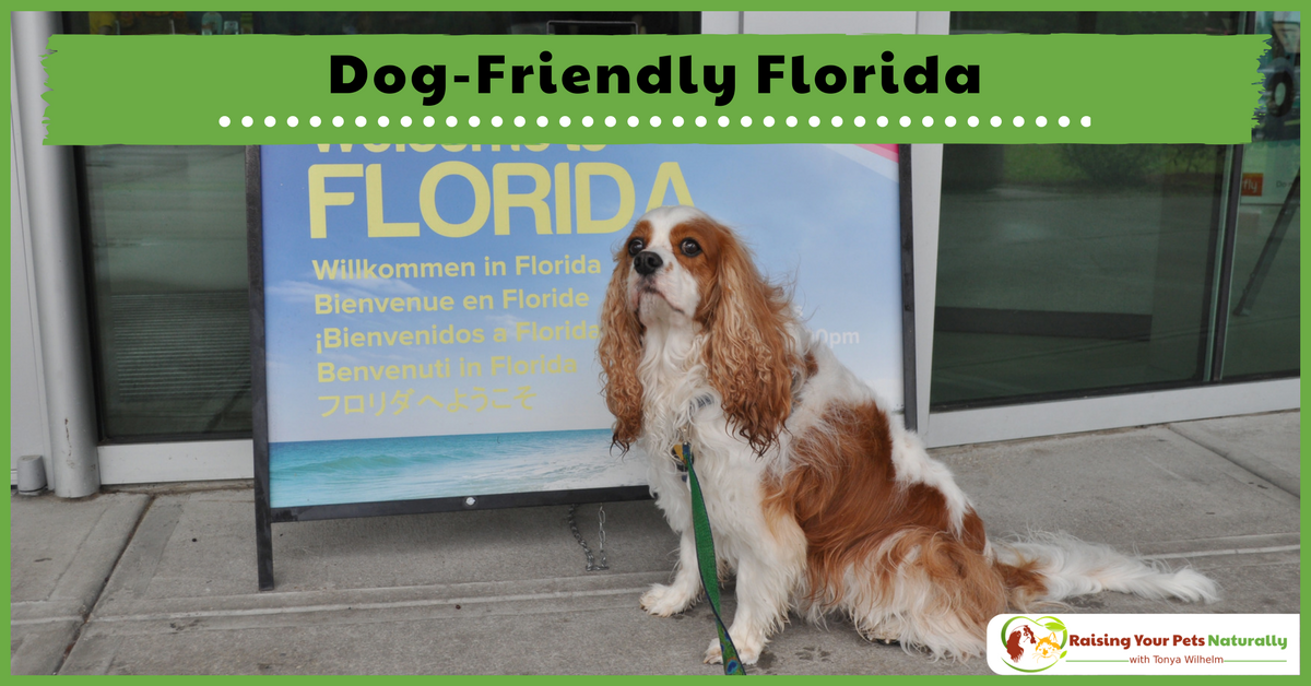 Dog-Friendly Florida Hotels, Restaurants, Stores and Activities. If you are traveling with your dog to Florida, you won't want to miss these dog-friendly destinations. #raisingyourpetsnaturally
