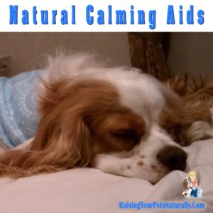 Natural Dog Calming Aids