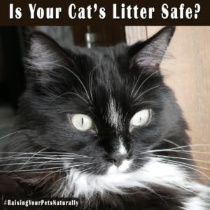 Safe Cat Litter