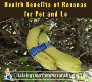 Bananas for Dogs, Cats, Pets