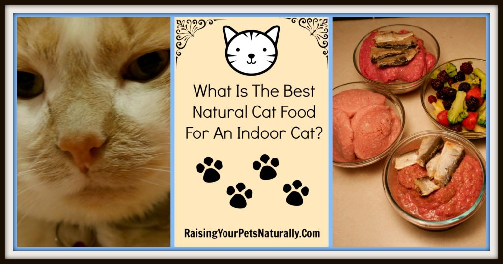 Best cat food for indoor cat